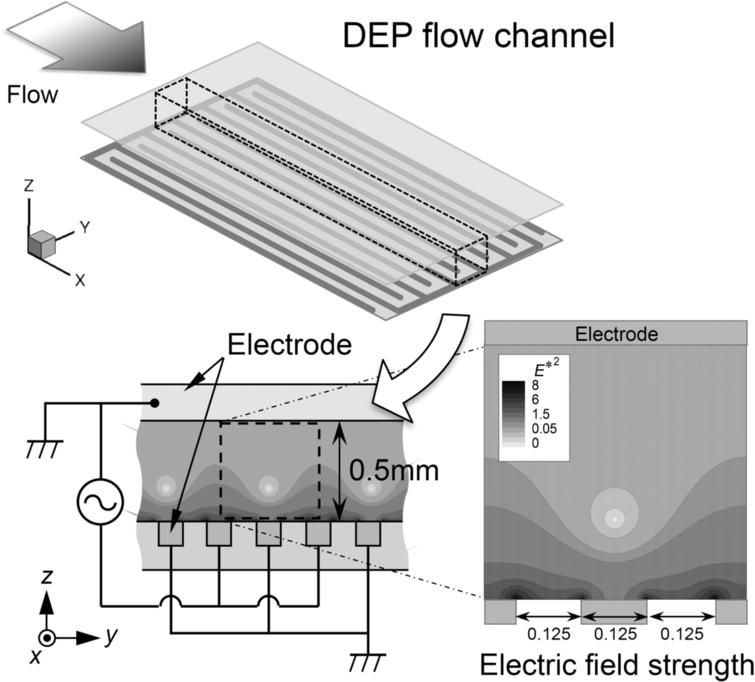 ac electric. schematic illustration of proposed dep flow channel, dimensions the computational \u201cunit volume\u201d ac electric
