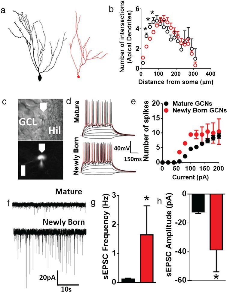The role of hippocampal adult neurogenesis in methamphetamine