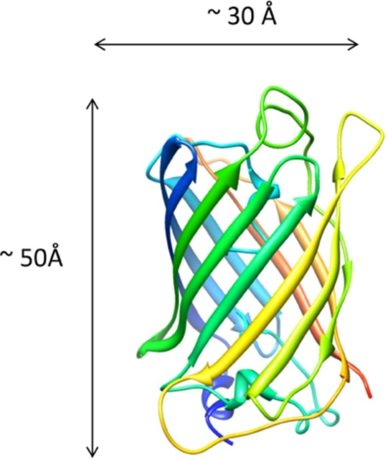 Monomeric green fluorescent protein as a protein standard