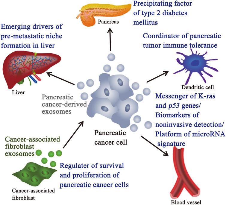 Predictive biomarkers for chemotherapies in pancreatic cancer - ARCHBPTH