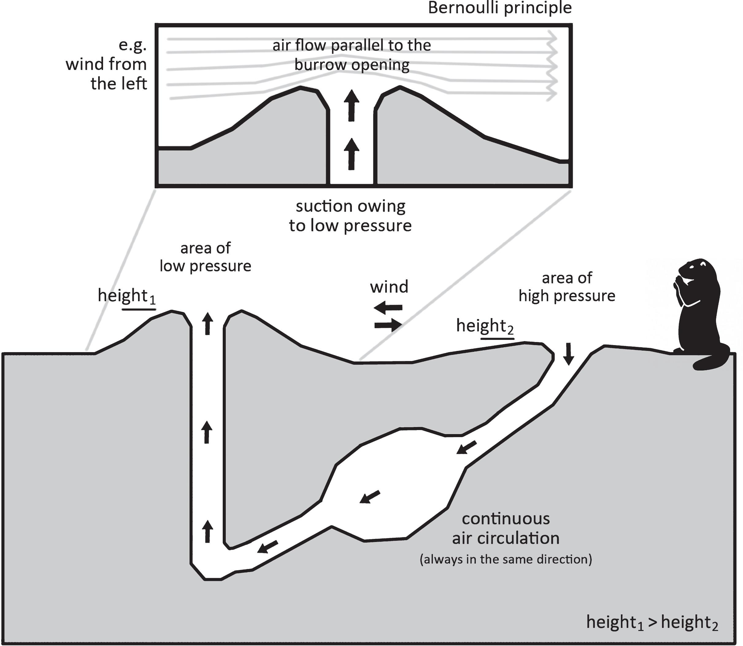 Resultado de imagem para prairie dog burrow air