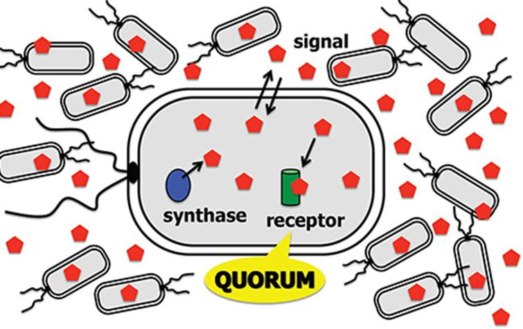 A new model for quorum sensing and image simulation of plant