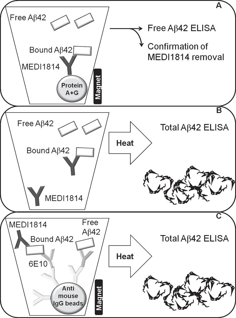 A schematic illustration of the assay set up to measure free Aβ42 in CSF (A), total Aβ42 in CSF (B), and total Aβ42 in plasma (C).