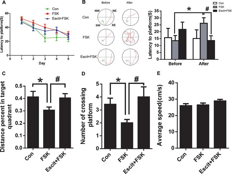 impact of stress on rats spatial learning and memory Long-term mild exercise training enhances hippocampus-dependent memory in rats k inoue,  ginsenoside rb1 improves spatial learning and memory by regulation of.