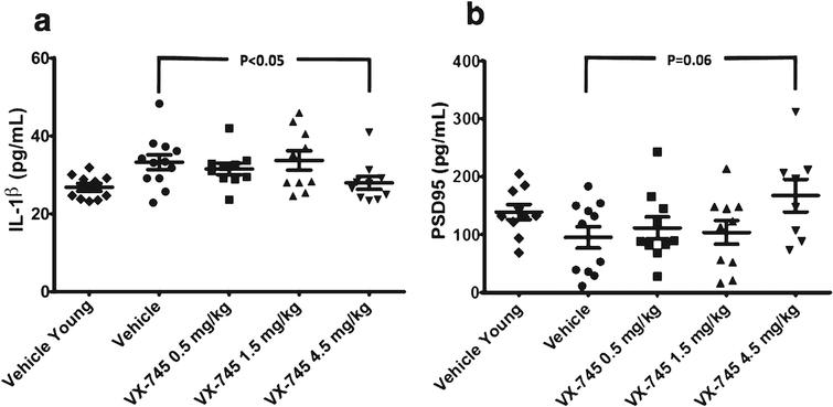 Protein levels of IL-1β (a) and PSD95 (b) in hippocampal homogenate. Obtained at sacrifice at end of treatment in vehicle-treated young rats and aged rats treated with vehicle or 0.5, 1.5, or 4.5 mg/kg of VX-745. 4.5 mg/kg VX-745 demonstrated significantly reduced IL-1β levels (p=0.038 by Mann-Whitney rank sum test) and a trend toward increased PSD95 levels (p=0.06) compared to vehicle-treated aged rats.