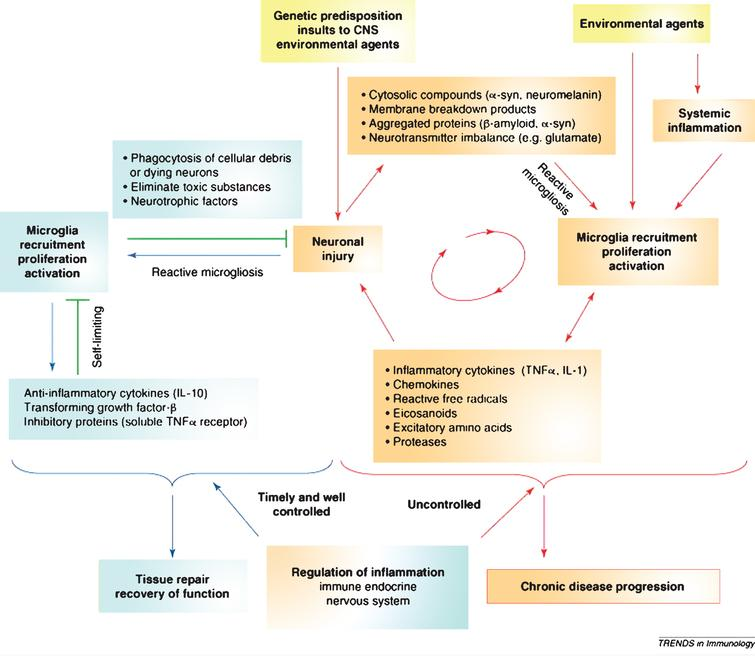 The vicious cycle of neurodegeneration. Neuroinflammation when controlled is reparative and self-limiting but when uncontrolled forms a vicious cycle and leads to chronic neurodegeneration. Figure from Gao HM, Hong JS (2008) Why neurodegenerative diseases are progressive: uncontrolled inflammation drives disease progression. Trends Immunol 29, 357-365 [1]. Copyright 2008. Reprinted with permission from Elsevier and John Hong.