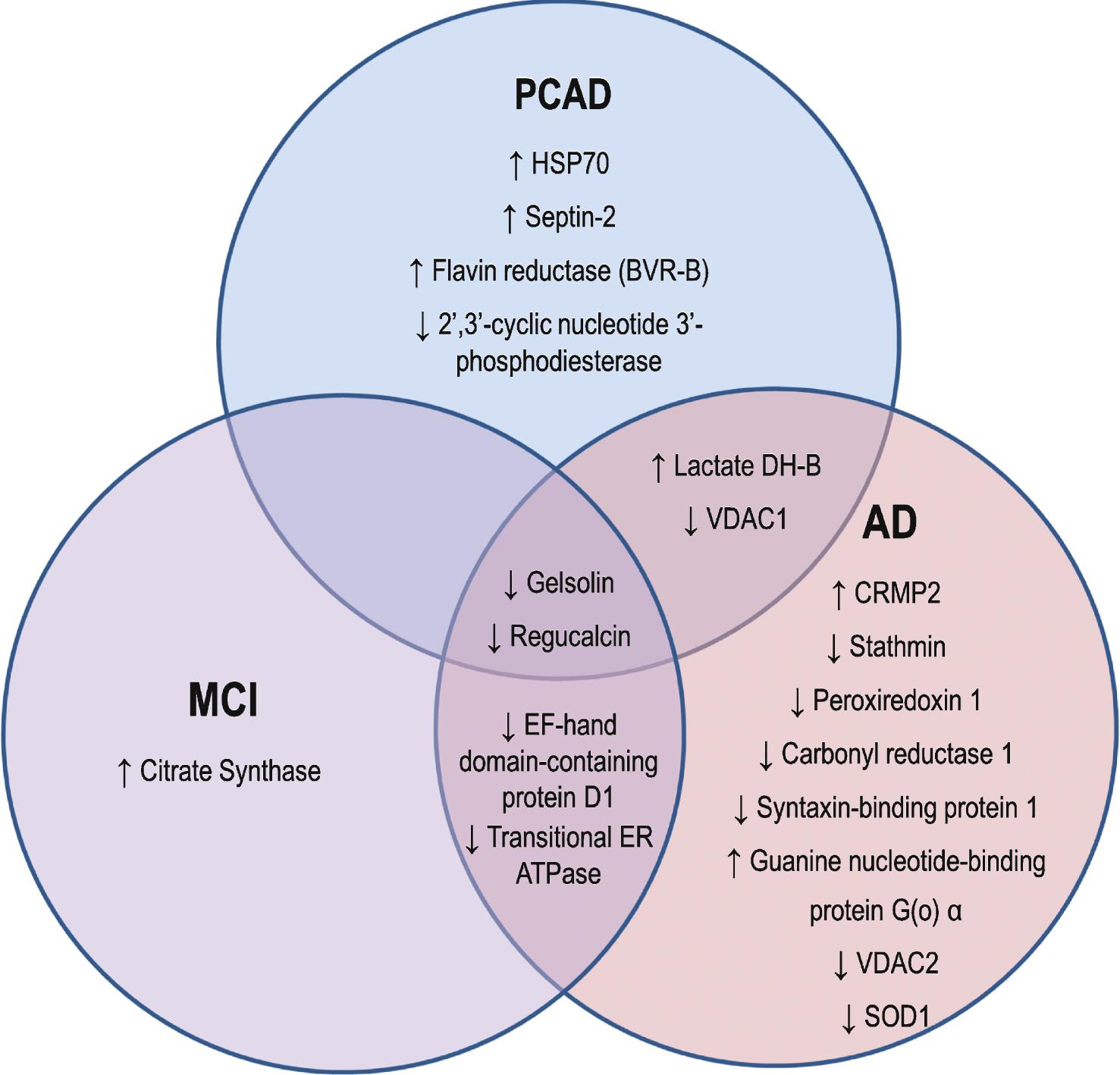 Endocytosis and exocytosis venn diagram vatozozdevelopment endocytosis ccuart Gallery