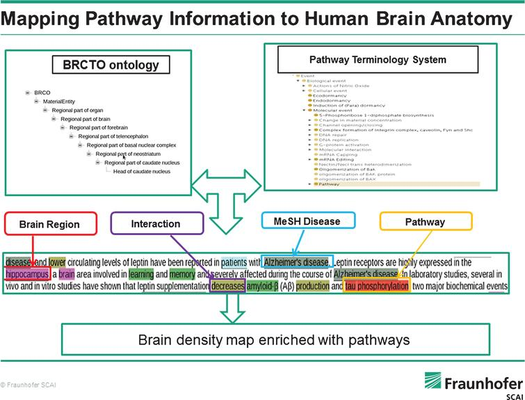 Towards a Pathway Inventory of the Human Brain for Modeling Disease ...