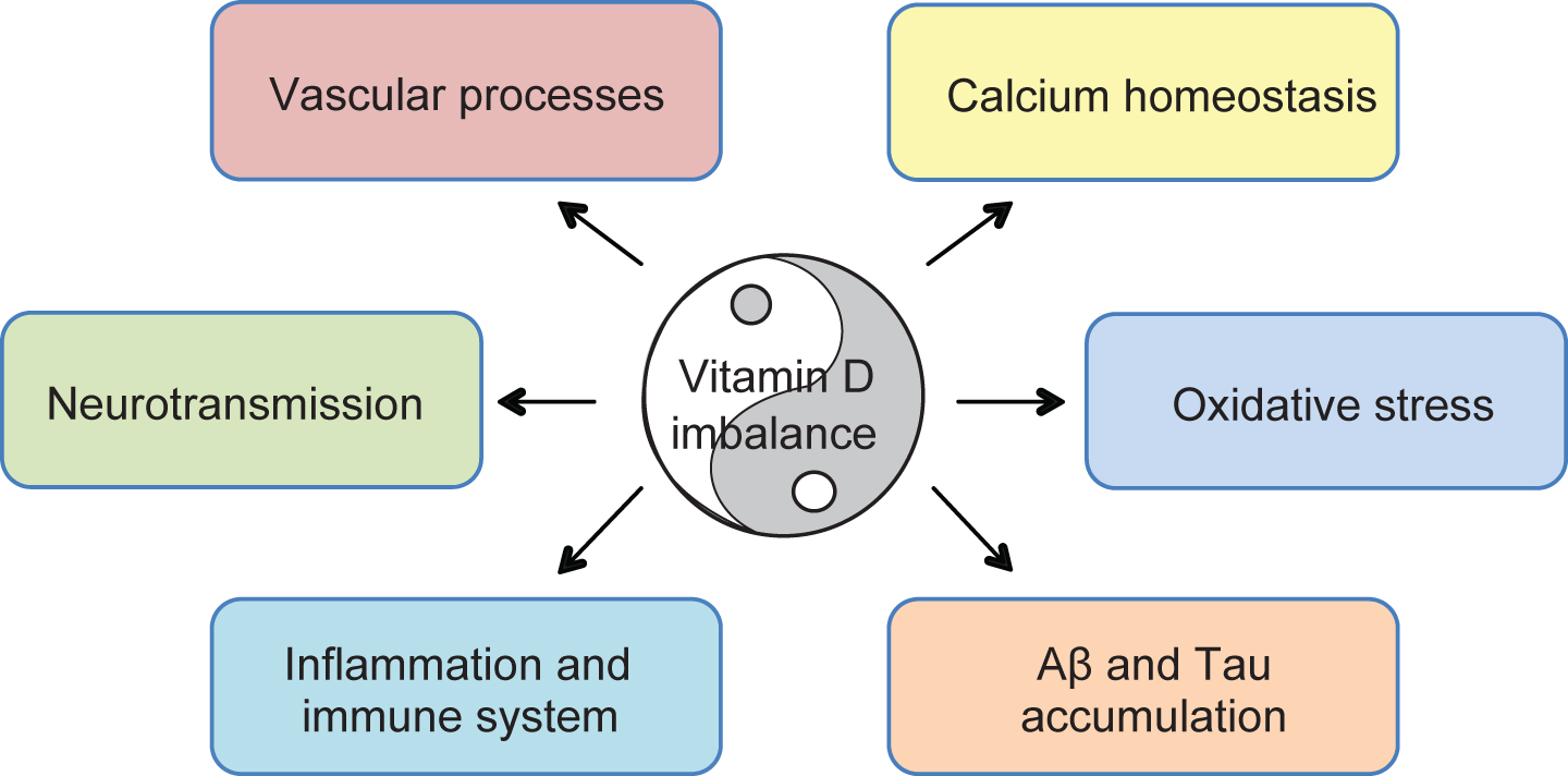 Vitamin D Cognition And Alzheimer's Disease The Therapeutic. Proposed Mechanisms Of Vitamin Dmediated Multitargeted Effects In Ad D. Wiring. Homeostasis Diagram Of Vit D At Scoala.co