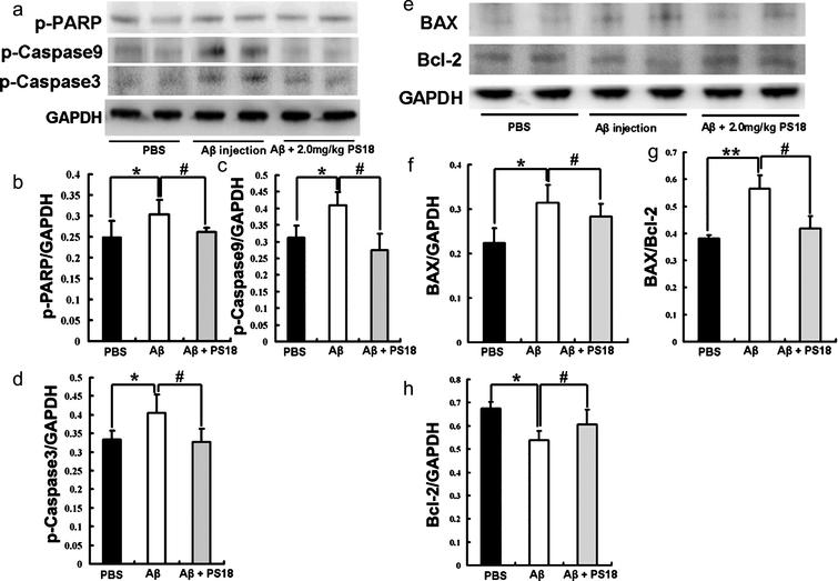 An 18 Mer Peptide Derived From Prosaposin Ameliorates The