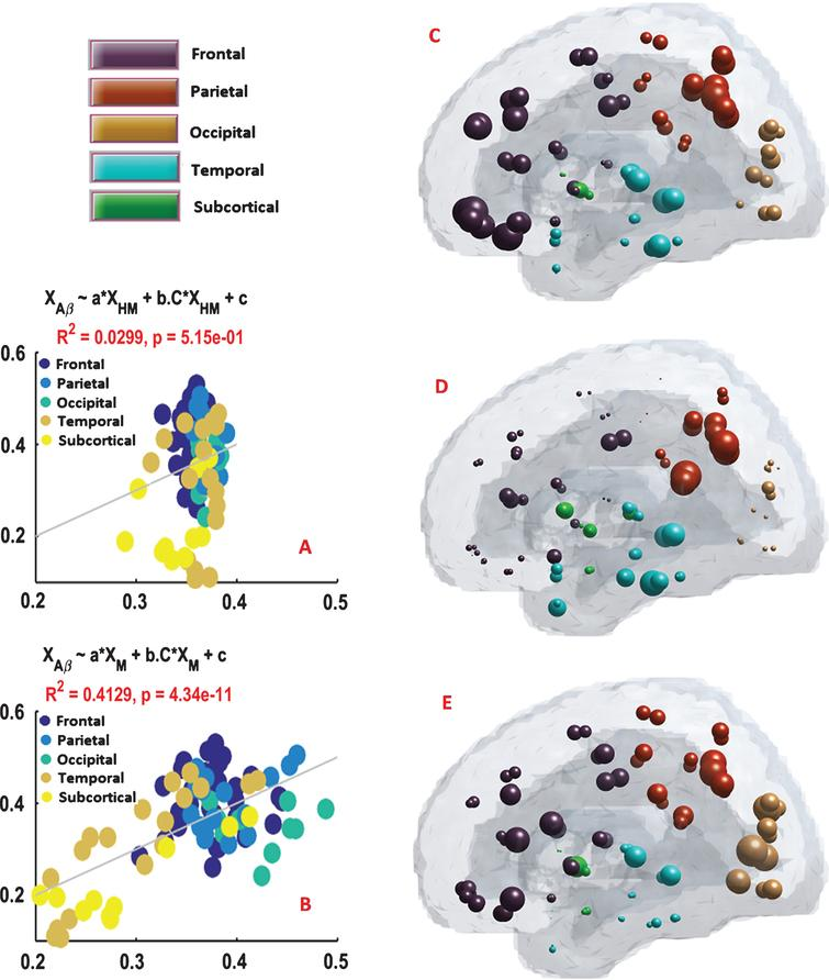 The Brains Structural Connectome Mediates The Relationship Between