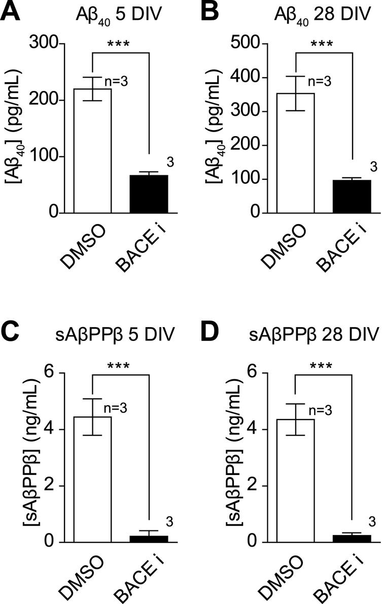 Inhibition of BACE1 activity decreases A and sA PP secretion during  synaptic developing and developed se