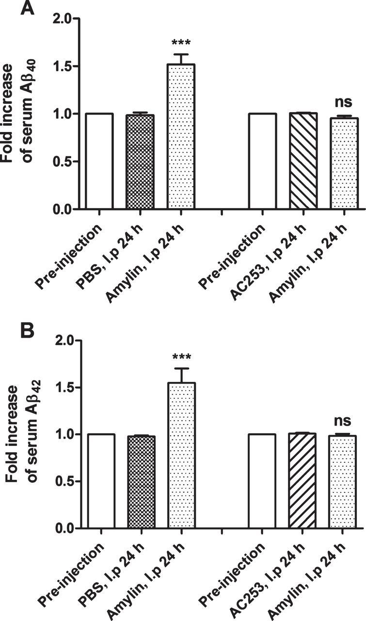 Amylin Enhances Amyloid-β Peptide Brain to Blood Efflux