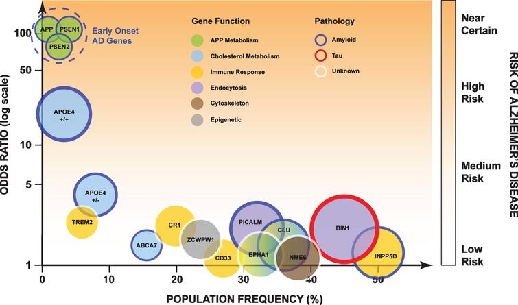 "Genetic risk factors for AD and their general role in physiological function. High risk genes are associated with increased severity of the disease and earlier age of onset, with low risk genetic factors age of onset is delayed and disease severity is less. The area of each circle is proportional to each genes' population attributable fraction (PAF). ""Larger"" genes have a greater influence of AD within the population. Figure adapted with permission [64]."