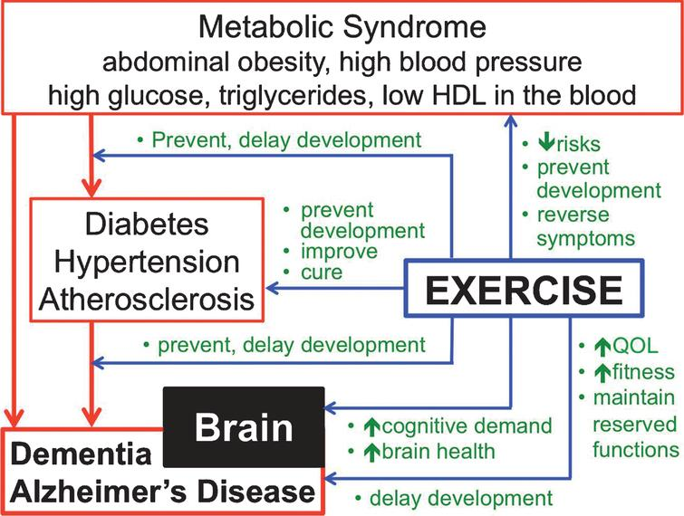 TYPES OF EXERCISE THAT MAY BENEFIT BRAIN HEALTH IN T2DM
