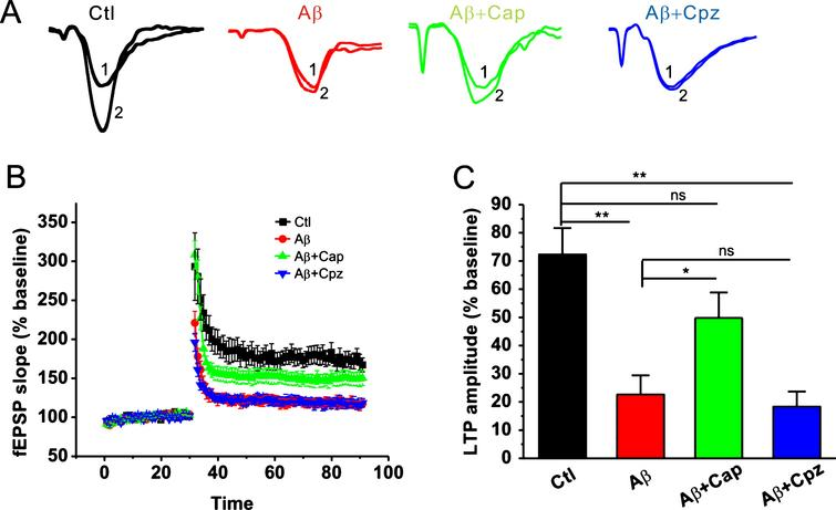 Capsaicin rescues the Aβ42-induced impairment of LTP in the CA1 area of hippocampus. Representative fEPSP traces (A) and plots of the normalized slopes (B) of the fEPSP 5 min before and 55 min after TBS delivery. C) Bar graphs of the average percentage changes in the fEPSP slope 55–60 min after TBS delivery. One-way ANOVA: F(3,27)=12.002, p<0.001. Data are expressed as means±SEM % baseline (n=7–9 slices from 4-5 different mice), **p<0.01, *p<0.05.