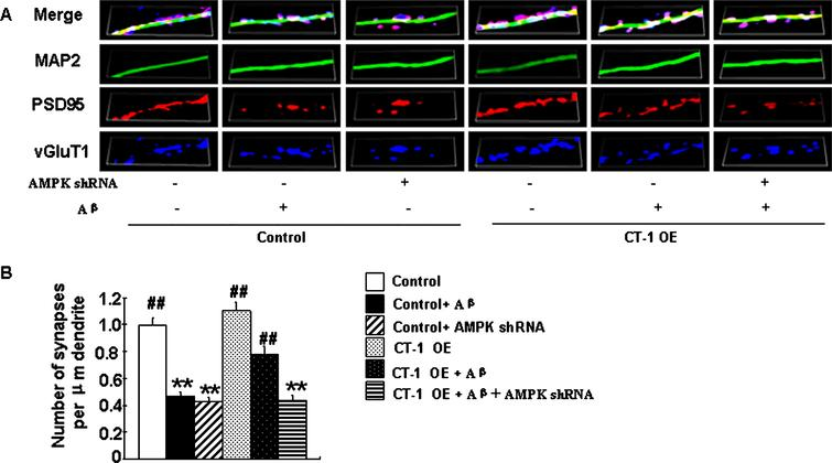 The Effects of Cardiotrophin-1 on Early Synaptic Mitochondrial