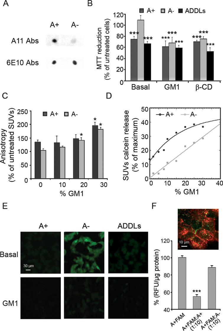 Soluble Oligomers Require A Ganglioside To Trigger Neuronal Calcium No Disassemble Johnny 5is Alive Cytotoxicity Of A42 On Human Neuroblastoma Sh Sy5y Cells With Basal And Increased Gm1