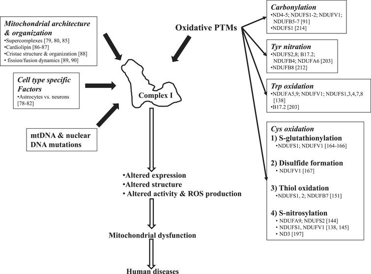 Post-Translational Oxidative Modifications of Mitochondrial