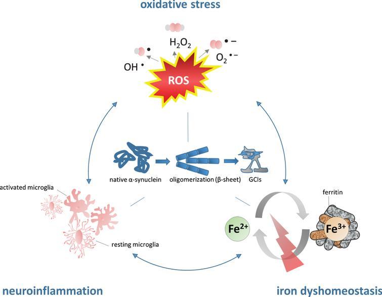MSAの病因における鉄の役割 鉄異栄養症は酸化ストレスとミクログリア活性化のレベルの増加に関連付けられています。 相乗的な自己摂食サイクルの連続的な形成は、α- SYNの凝集および二次的な神経変性を促進する。 Fe 2+、鉄の鉄の形態、Fe 3+、鉄の鉄の形態、GCI、グリア細胞質封入体。 H 2 O 2、過酸化水素。 O 2 - 、スーパーオキシドアニオン。 OH - 、ヒドロキシルラジカル。 ROS、活性酸素種。