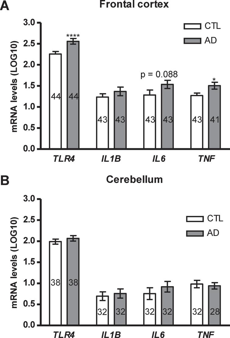 TLR4 Gene Expression and Pro-Inflammatory Cytokines in
