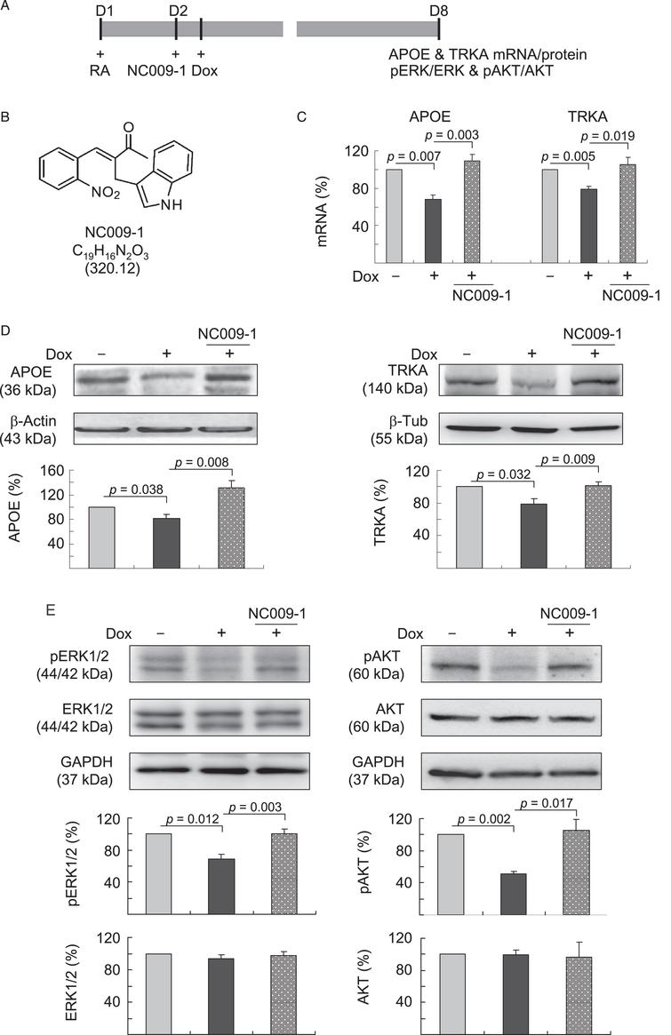 Indole Compound NC009-1 Augments APOE and TRKA in