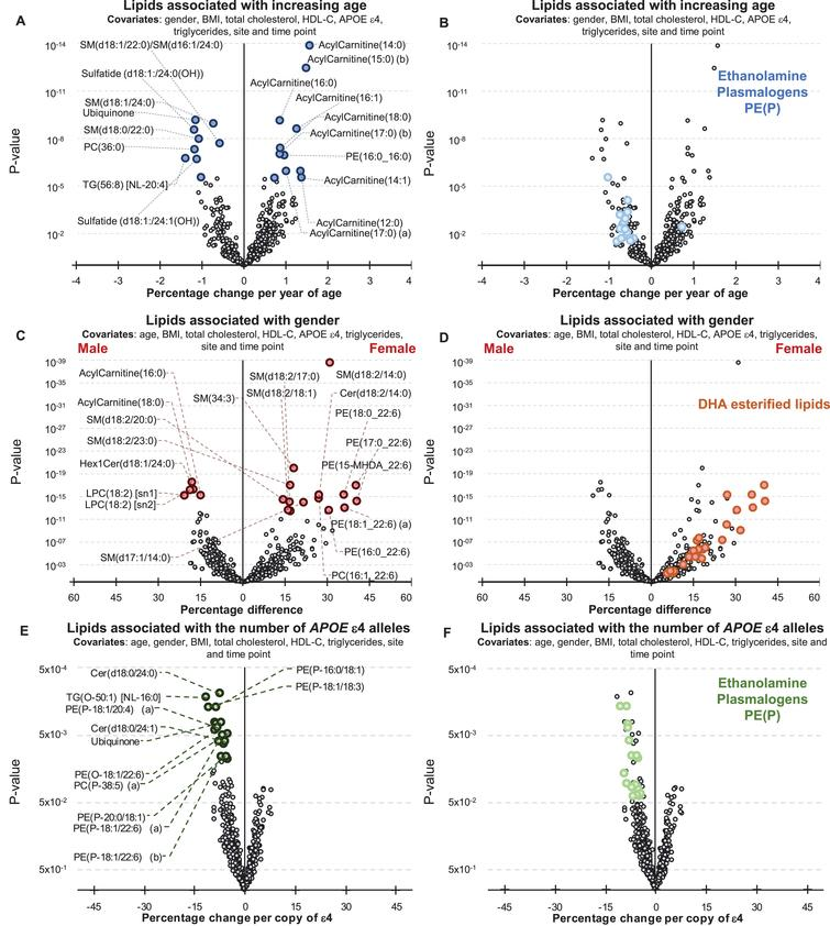 Associations between Alzheimer's disease risk factors and plasma lipid species. Linear regression analyses of risk factors against plasma lipid species were performed adjusting for covariates as indicated. The most recent available sample of each healthy control individual were used (n = 696). A, B) Associations between plasma lipids and aging. A) Lipids with a p-value less than 3.01×10–6 (top 20) are highlighted in blue. B) Ethanolamine plasmalogens, PE(P), with p < 0.05 are highlighted in light blue. C, D) Associations between lipids and gender. C) Lipids with a p-value less than 3.25×10–13 (top 20) are highlighted in red. D) Glycerophospholipids esterified with a 22:6 fatty acid with p < 0.05 (DHA, docosahexaenoic acid) are highlighted in orange. E, F) Associations between lipids and APOE ɛ4 status. E) Lipids with a p-value less than 1.13×10–2 (top 20) are highlighted in green. F) Ethanolamine plasmalogens, PE(P), with p < 0.05 are highlighted in light green.