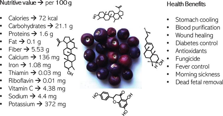 Phalsa ( Grewia asiatica L) fruit berry a promising functional food