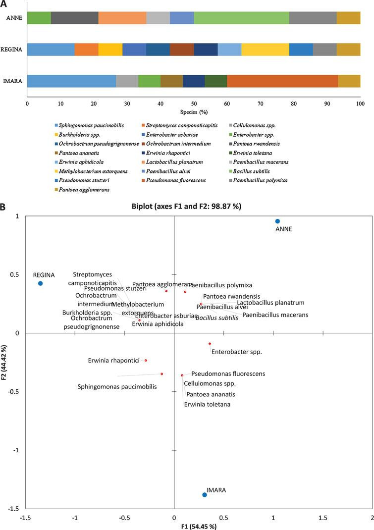Genetic and functional characterization of the bacterial community