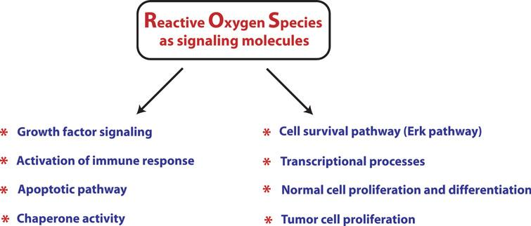 A brief overview of involvement of reactive oxygen species in multiple physiological and pathological functions as signaling molecules. Recent findings have placed ROS as very critical signaling factors which are involved in regulating not only pathological functions but also in a host of functions necessary for normal cellular function. Therefore, a very careful attention is needed before considering antioxidants as therapeutic options for Huntington's disease.