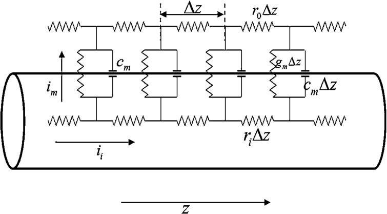 Schematic Diagram Of R C Circuit Models For Neuronal Signal Propagation Here Cm Is The
