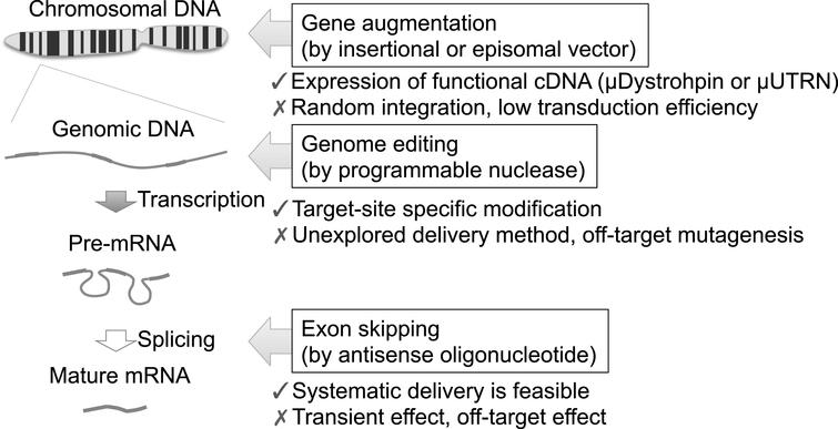Genome Editing Gene Therapy for Duchenne Muscular Dystrophy