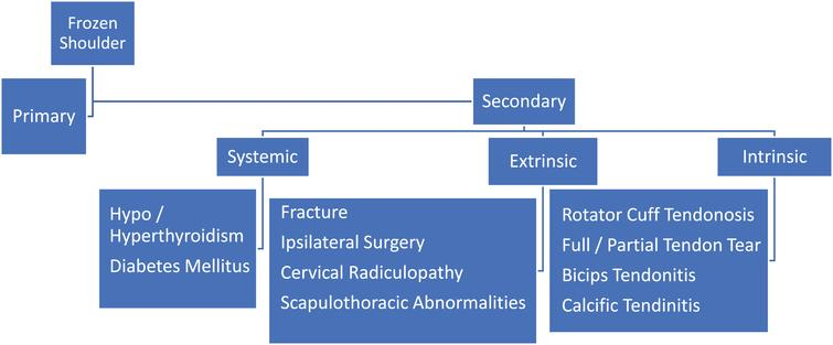 """The Fifty-Year-Old Shoulder"""": Anatomy of a complex problem"""