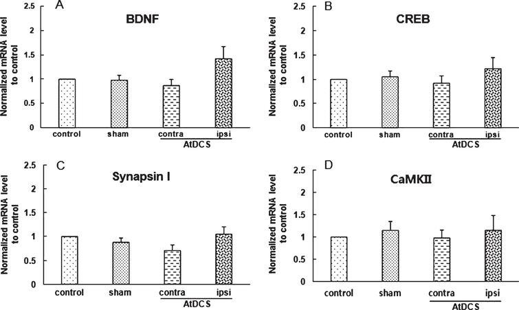 Repeated anodal transcranial direct current stimulation