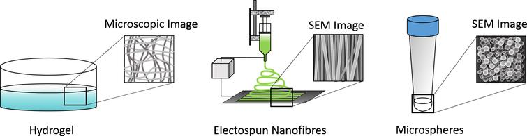 Commonly used scaffold formulations for engineering tissues from stem cells include hydrogels, electrospun scaffolds, and nano/microspheres.