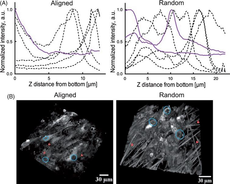 Combining Stem Cells and Biomaterial Scaffolds for