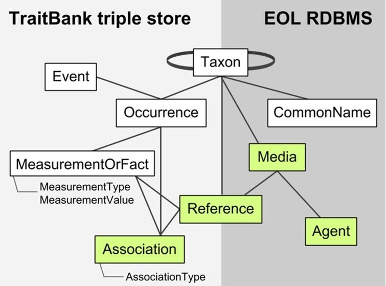 Data model and architecture for TraitBank/EOL. Elements are from Darwin Core except for the following extensions developed by EOL: Media (with Audubon Core), References (with BIBO), Associations (under development), and Agents. Only the most important properties are indicated. TraitBank elements may hold only pointers to elements managed in the EOL relational database management system (RDBMS), like taxon names and references.