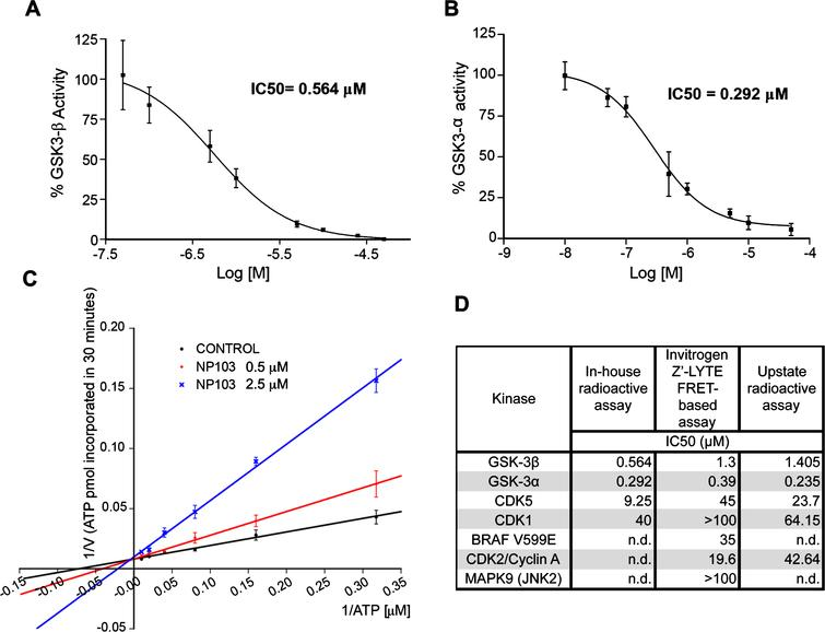 Characterization of NP103 compound as GSK-3 selective inhibitor. A, B) NP103 inhibits GSK-3β and GSK-3α in vitro. Data represent the mean values+SD of the percentage of enzymatic activity. Each data point was assayed in duplicates. IC50 values were calculated from the concentration-response curves. C) Effect of different ATP concentrations on GSK-3β activity. A double-reciprocal Lineweaver-Burk plotting of the enzyme kinetics in the presence of two different concentrations of NP103 is shown. Each point represents the mean value oftwo independent experiments. No competition with substrate was observed (not shown). D) NP103 kinase inhibition selectivity profile. A comparison among external and in-house obtained results in selected kinases.