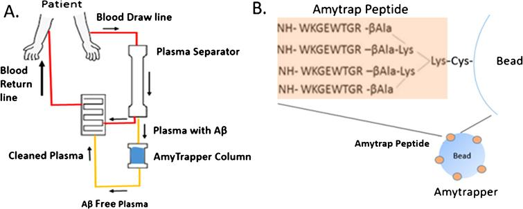 A) Flowchart of Amytrapper, a treatment option for Alzheimer's disease patients. Patient plasma is passed through Amytrapper where API conjugated sepharose beads sequester plasma Aβ returning Aβ-free plasma to the patient. B) The Amytrap peptide, an Aβ binding retro-inverso peptide is conjugated to the bead by a PEG linker.