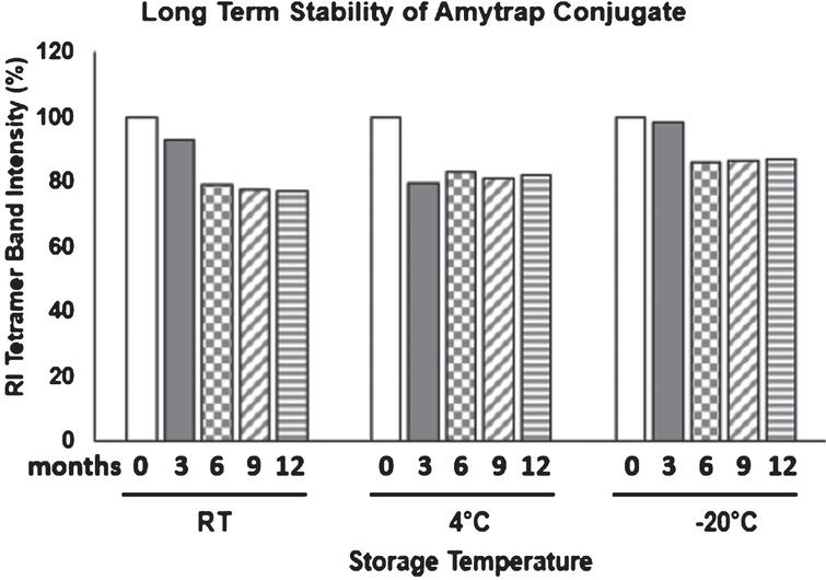 Long-term stability of Amytrap conjugate. Stability of Amytrap conjugate at RT, 4°C and -20°C was tested at 3, 6, 9, and 12 months as represented by tetramer band intensity on immunoblot. Samples were dissolved and analyzed by SDS-page. 3-month samples were taken as 100%.