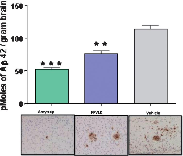 Brain amyloid in 5-month-old AD model mice. Aβ42 content in brain extracts by ELISA (histogram) and brain sections (lower panel) by immunohistochemistry from mice treated 5 months (n=12). Values are expressed as Mean±SD and statistical significance was calculated by the students t-test; ***p<0.001 and **p<0.05