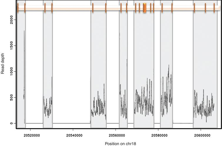 Amplicon position and coverage. The relative position of the 18 exons of CtIP is shown at the top. Each exon is represented by a vertical bar. Grey boxes highlight the region encompassed by each of the 7 amplicons used in this study. The representative read depth for each amplicon is shown at the bottom as a density plot. No reads were identified outside the amplified regions.