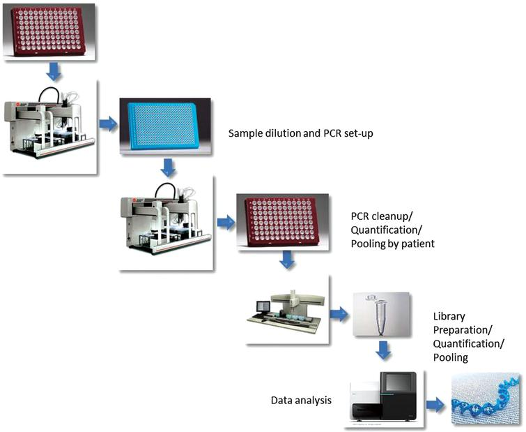 Schematic representation of the workflow followed for this study. Briefly, liquid handling platforms were programmed to perform sample transfers, PCR reaction set up, clean up and pooling, library construction. The final pooled library was sequenced on a single MiSeq run.