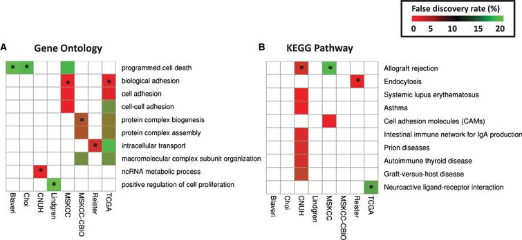 Prognostic modules associated with outcome in bladder cancer patients with high-grade, muscle invasive tumors. In each cohort, (A) over-represented Gene Ontology (GO) terms and (B) KEGG pathways were identified from lists of genes significantly predictive of disease outcome (P< 0.01) using the DAVID gene annotation enrichment analysis toolkit. Consistently prognostic modules were identified by ranking all modules first by the number of cohorts with significant results (FDR< 20% ) and then by average p-value. Each figure includes ten modules: the most consistently prognostic modules and the 'top hit' for each cohort, marked by an asterisk (*), which is defined as the module with the lowest FDR in that cohort that has an FDR< 20% in multiple cohorts, or if no such module exists, then the module with the lowest FDR.