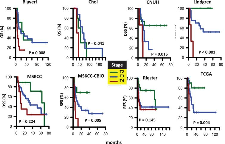 Survival of patients according to tumor stage. Kaplan-Meier curves were generated for patients with T2 (green), T3 (blue), and T4 (red) tumors in Blaveri (N=44), Choi (N=22), CNUH (N=28), Lindgren (N=32), MSKCC (N=60), MSKCC-CBIO (N=47), Riester (N=78), and TCGA (N=147) cohorts. The log-rank P value is reported. Abbreviations: DSS, disease-specific survival; OS, Overall survival; RFS, recurrence-free survival.