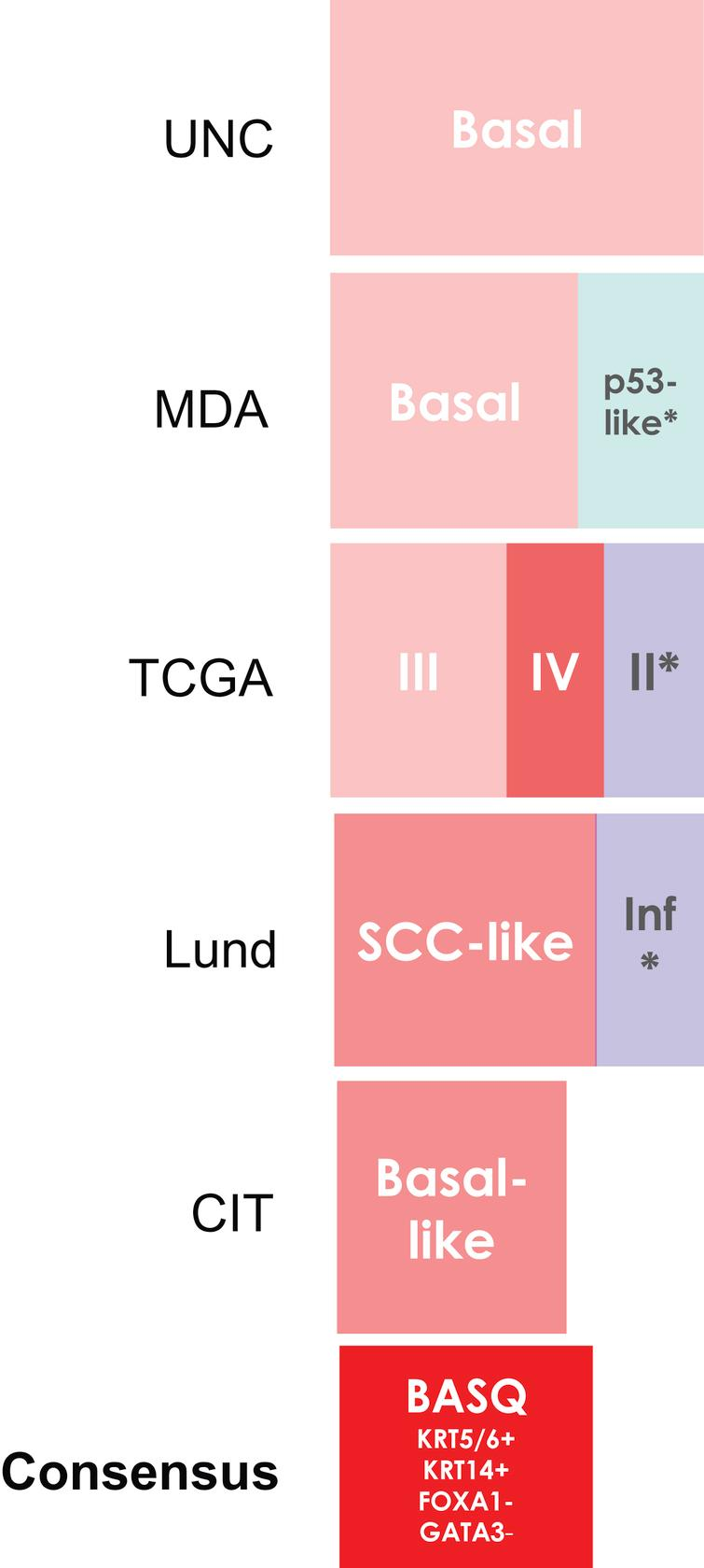 """Comparison of the bladder cancer classifications as they relate to the """"BASQ"""" (Basal-Squamous-like) consensus group. In red background, the subtypes that are enriched in this group. Tumor subclasses in other colors (p53-like, TCGA II, Infiltrated) comprise samples that would be included in the BASQ group and others that would not. Tumors in these three categories also express markers typical of urothelial differentiation to a variable extent. In red, the consensus definition of the """"BASQ"""" subtype."""