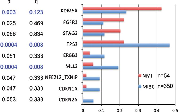 Comparison of mutation frequencies in non-muscle invasive (NMI) vs. muscle invasive bladder cancer (MIBC). Mutation frequencies are shown for genes for which there were some evidence for a difference in mutation frequency between NMI and MIBC. P is conventional p values by Fisher exact text; q is values after correction by FDR for multiple comparisons.