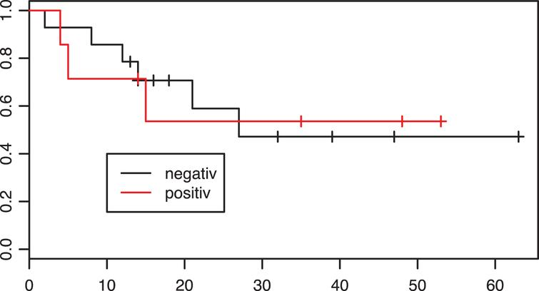 Kaplan-Meier estimates of survival according to PD-L1 tumor status in the neoadjuvant group. X axis: Overall survival in months. p=0.97.
