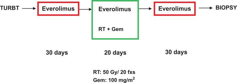 Schematic diagram of treatment protocol.