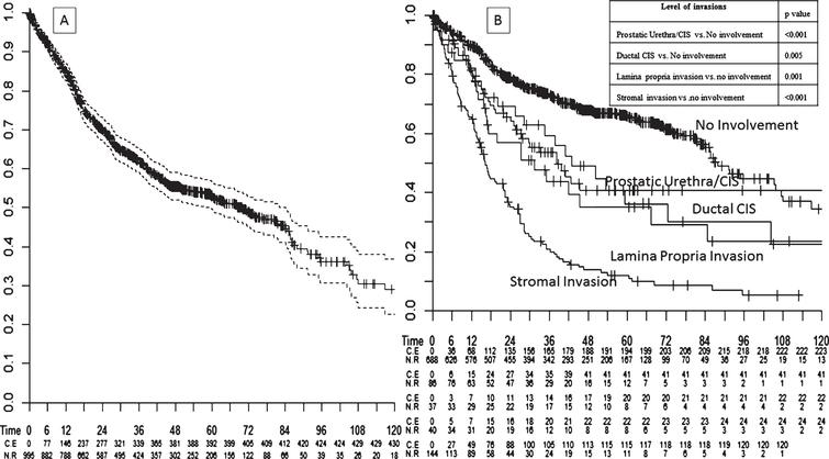 Kaplan-Meier survival analysis assessing (A) overall mortality -free rates in 995 bladder cancer patients treated with radical cystoprostatectomy. Analyses were repeated (B) after stratifying patients according to the level of prostatic invasion (no invasion vs. prostatic urethral CIS vs. lamina propria invasion vs. ductal CIS vs. stromal invasion).